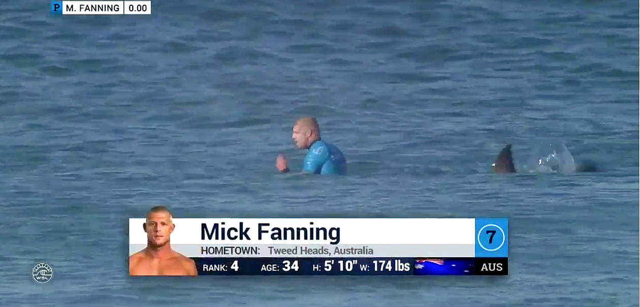 surfer attacked by shark