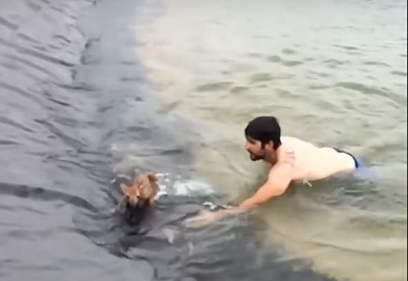 Science hunk rescues fawn