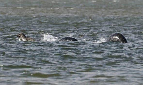 Nessie Loch Ness Monster
