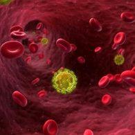 hiv_virus_in_the_bloodstream_alamy-large_transpjliwavx4cowfcaekesb3kvxit-lggwcwqwla_rxju8