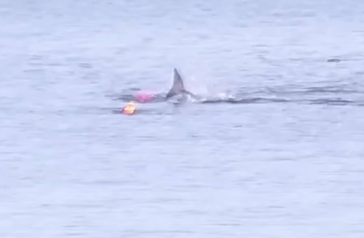 kayak shark
