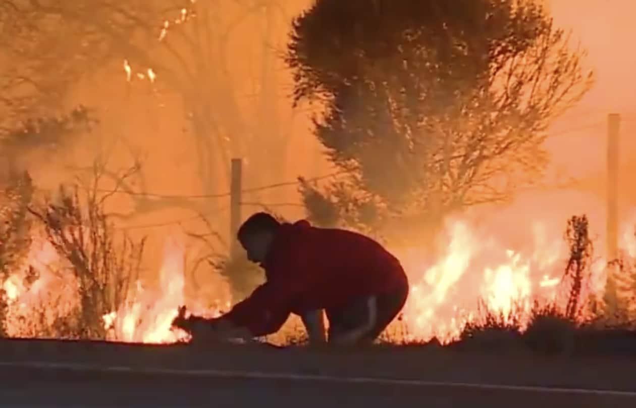 wildfire rabbit rescue