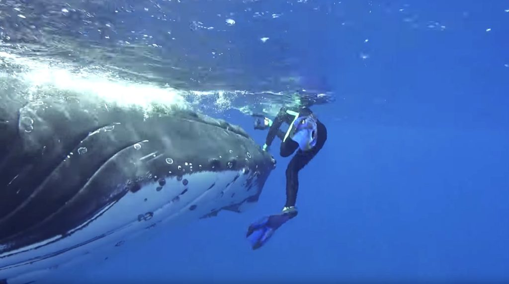 whale protects woman