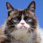 Meme Superstar Grumpy Cat is Dead at 7