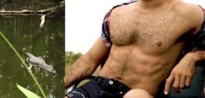 gay alligator