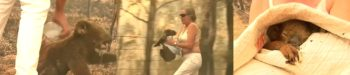 Badass Woman Removes Shirt, Rescues Crying Koala from Raging Australian Bushfire in Gripping Video