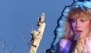 Stevie Nicks white winged dove