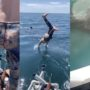 Man Jumps in Ocean with Large Shark, Regrets It Immediately: WATCH