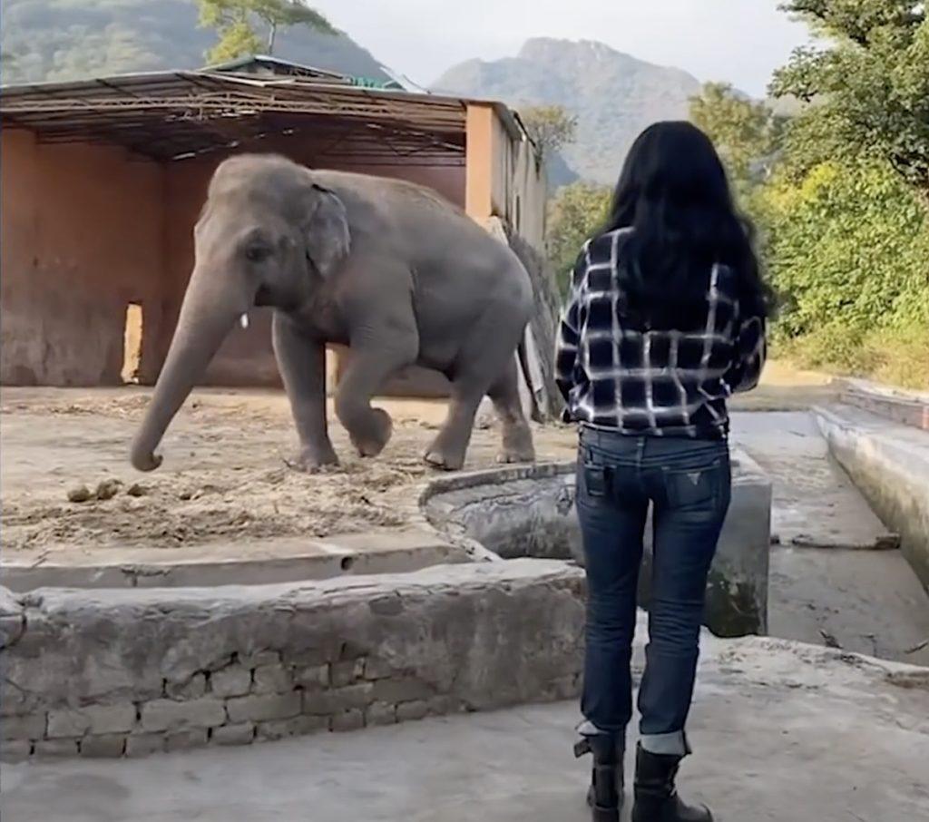Cher elephant