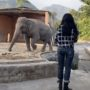 Cher Serenades 'World's Loneliest Elephant' After Helping Him Escape to a New Life: WATCH