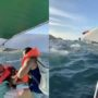 Gay Party Boat with 60 Aboard Capsizes in Puerto Vallarta Amid COVID Pandemic: WATCH