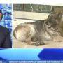 Newsmax Host Attacks Biden's 12-Year-Old German Shepherd: 'This Dog Looks Like it's from the Junkyard' — WATCH