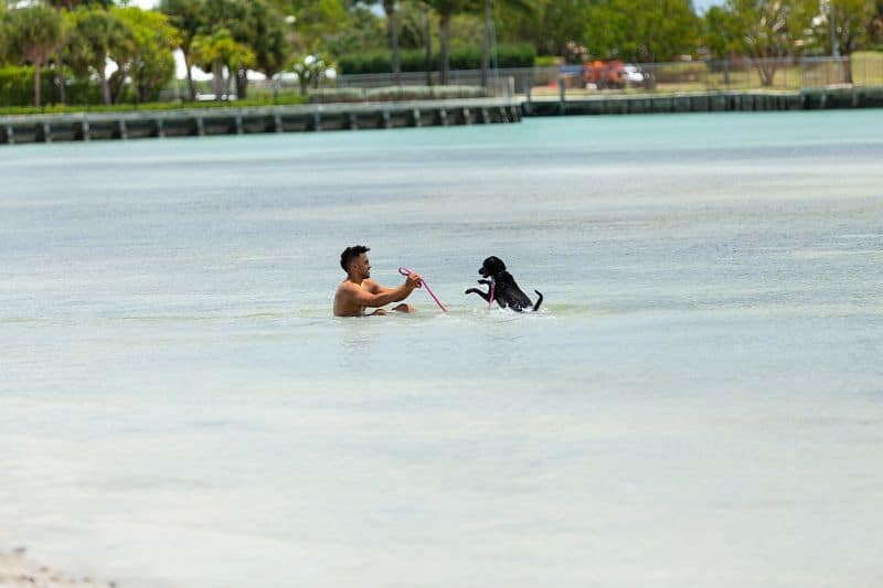 Puppy play is welcome at Miami's Hobie Beach. Photo courtesy of the GMCVB.